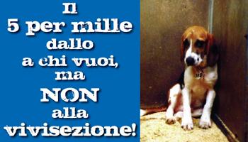 http://www.agireora.org/img/newsletter/5-per-mille.jpg