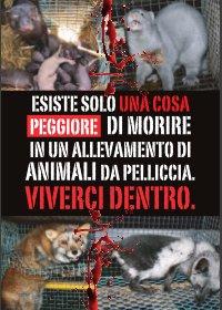 Cartelloni contro le pellicce - AgireOra