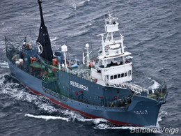 sea-shepherd-hunts-whalers.jpg